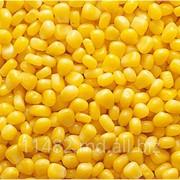 Производство, сбор , переработка и реализация подсолнечника, кукурузы, пшеницы фуражной. фото