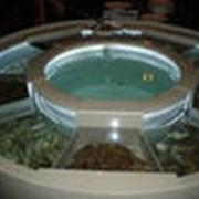 Изготовление аквариумных комплексов Бамбу Бар фото