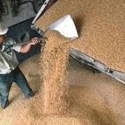 Хранение, зерна, зерно, хранение фото