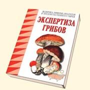 Экспертиза грибов фото