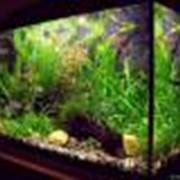 Оформление аквариумов в Алматы фото