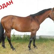 Продажа лошадей. фото