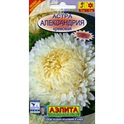 Семена цветов Астра Александрия кремовая фото