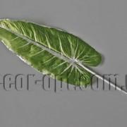 Лист Mamutowca в серебре 22/45 см 000401 фото