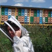 Павильон для пчёл !Продан, но есть возможность повторить! фото