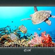 Картина с подсветкой Подводный мир 29х45 фото