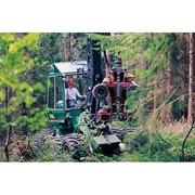 Услуги лесозаготовки фото