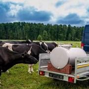 Емкость Б/У для транспортировки молока и воды 300 литров фото