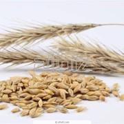 Заготовка, сушка, хранение семенного зерна,Очистка зерна фото