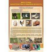 Плакат Обработка птицы Г.15 фото