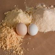 Яичный порошок (меланж) ГОСт фото