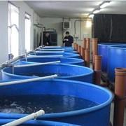 Разведение пресноводной рыбы, рыбопосадочный материал, Проектируем инкубационные участки фотография