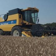 Уборка зерновых комбайнами New Holland фото