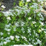 Лекарственные травы: Алтея, Эхинацея, Нагидки, Ромашка, Фенхель, Расторопша фото