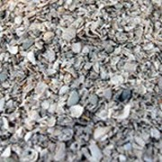 Ракушка морская кормовая фото