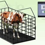 Весы для животных, Весы для КРС 1 тонна фото