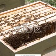 Ульи, Оборудование для пчеловодства фото