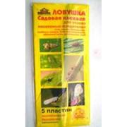 Ловушка садовая клеевая 5 пластин (в упаковке 5 шт) фото