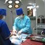 Услуги ветеринарные хирургические фото