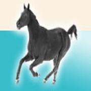 Прогулка конная на ландо фото