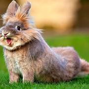 Премиксы для кроликов, премиксы для пушных зверей фото