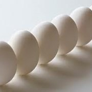 Белок яичный жидкий фото