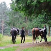 Лошади на мероприятия фото