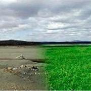 Восстановление аридных и засоленных почв фото