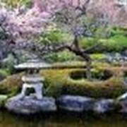 Ландшафтный дизайн сада фото