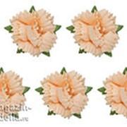 Гвоздики, набор 5 шт, персиковые фото