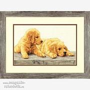 Golden Retriever Puppies фото