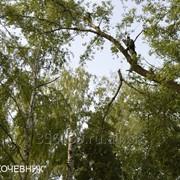 Удаление деревьев фото