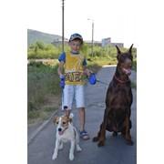 Воспитание и дрессировка собак в Минске фото