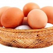Био яйца, Яйца куриные, Домашние яйца, Экологические яйца, Экол фото