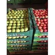 Яблоки/Apples