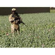 Охрана урожая фото
