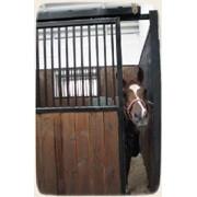 Квалифицированное ветеринарное наблюдение за лошадьми фото