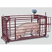 Весы для взвешивания животных на нагрузку 1500кг платформа 1250мм х 2000мм фото