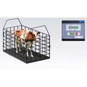 Весы для животных, Весы для взвешивания скота, свиней и других животных 600кг, 1000кг, 2т, 3т фото
