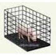 Электронные платформенные весы ВНТ-500 для взвешивания свиней (мобильные) фото