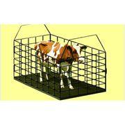 Весы для взвешивания животных от производителей: Промприлад, Техноваги и др. Купить весы фото