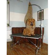 Штатив-держатель для груминга собак средних и крупных пород повышенной прочности. (нержавеющая сталь) фото