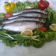 Сельдь с/с, рыба слабосоленая фото