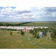 Ферма животноводческая продается ферма купить ферму фото