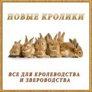 Вакцины для кроликов, консультация, продажа фото