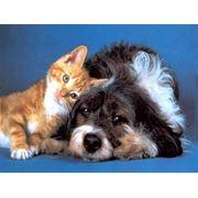 Средства ветеринарные противопаразитарные фото