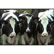 Витамины ветеринарные, белково-минерально-витаминные добавки (БМВД) для скота и птицы фото