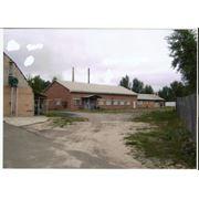 ПРОДАМ !!Производственный комплекс в окрестностях г.Чернигова фото