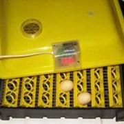 Инкубатор бытовой автоматический ASEL 56 куриных фото