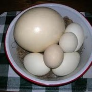 Скорлупа страусиного яйца фото